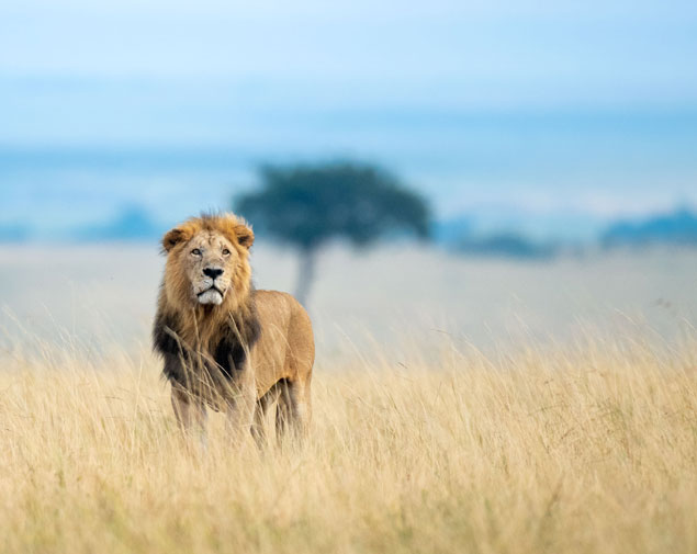 MASAI MARA/ MOMBASA/ NAIROBI 7 DAYS / 6 NIGHTS